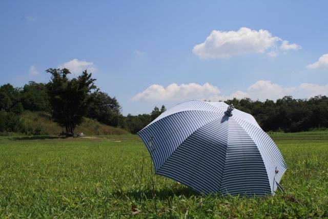 日光を浴びる傘