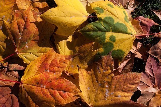 乾燥した葉っぱの画像
