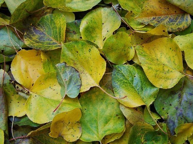 湿った葉っぱの画像